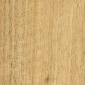 A sample of sealed Korina (White Limba)