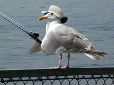 fishing seagull