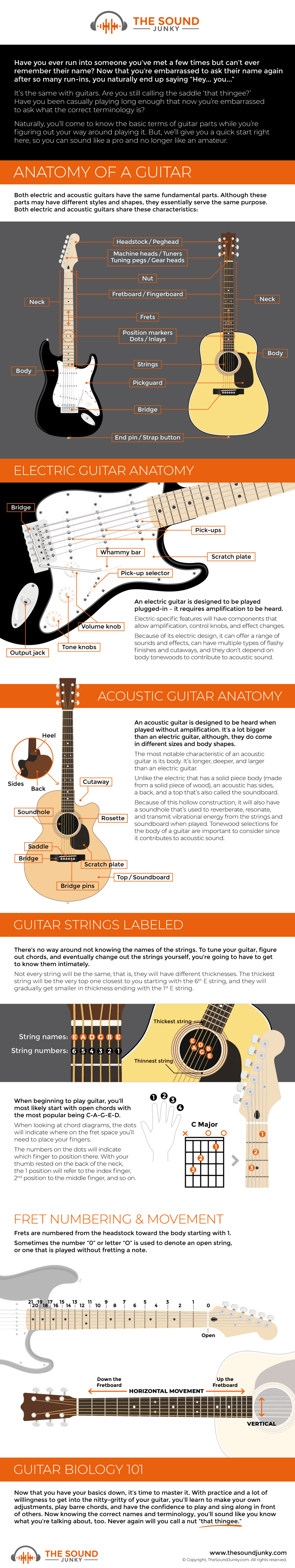 Guitar Anatomy Infographic