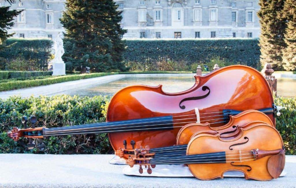Size Comparison of Violin and Cello