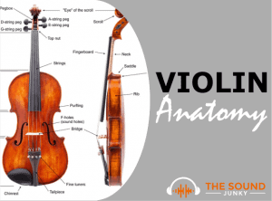 Violin Anatomy - Parts of a Violin Labelled