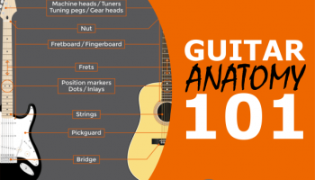 Anatomy of a Guitar Including Parts, String Labels, Fret Numbering & More! (Infographics)